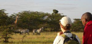 web_kenya_giraffe-monitoring